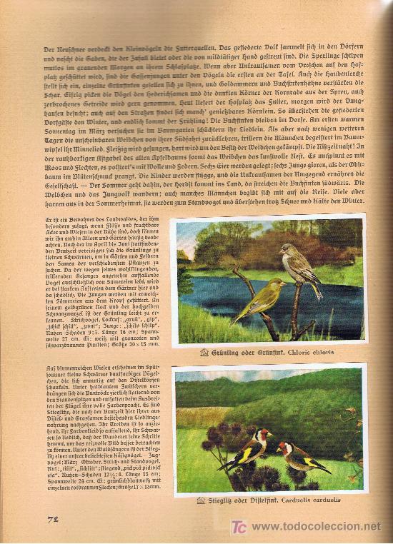 AUS DEUTSCHLANDS ED. HAMBURGO 1936 PRECIOSA COL. COMPLETA DE 200 CROMOS DE AVES COMENTADOS VER FOTOS (Coleccionismo - Cromos y Álbumes - Álbumes Completos)