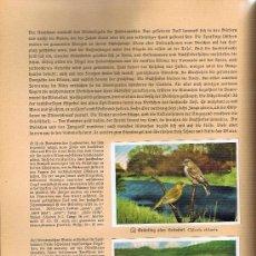 Coleccionismo Álbum: AUS DEUTSCHLANDS ED. HAMBURGO 1936 PRECIOSA COL. COMPLETA DE 200 CROMOS DE AVES COMENTADOS VER FOTOS. Lote 23599646