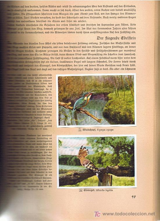 Coleccionismo Álbum: Aus Deutschlands Ed. Hamburgo 1936 preciosa col. completa de 200 cromos de aves comentados ver fotos - Foto 3 - 23599646