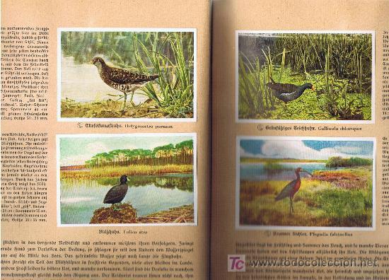 Coleccionismo Álbum: Aus Deutschlands Ed. Hamburgo 1936 preciosa col. completa de 200 cromos de aves comentados ver fotos - Foto 11 - 23599646