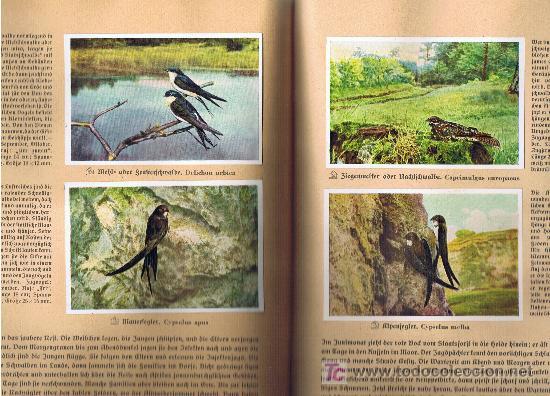 Coleccionismo Álbum: Aus Deutschlands Ed. Hamburgo 1936 preciosa col. completa de 200 cromos de aves comentados ver fotos - Foto 10 - 23599646