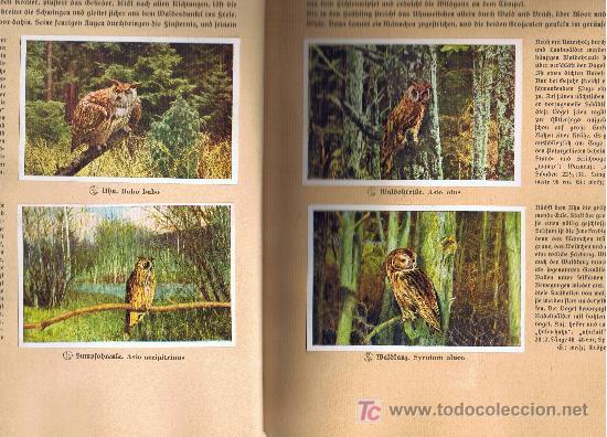 Coleccionismo Álbum: Aus Deutschlands Ed. Hamburgo 1936 preciosa col. completa de 200 cromos de aves comentados ver fotos - Foto 9 - 23599646