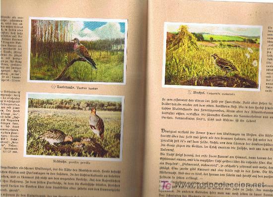 Coleccionismo Álbum: Aus Deutschlands Ed. Hamburgo 1936 preciosa col. completa de 200 cromos de aves comentados ver fotos - Foto 8 - 23599646