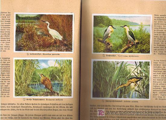Coleccionismo Álbum: Aus Deutschlands Ed. Hamburgo 1936 preciosa col. completa de 200 cromos de aves comentados ver fotos - Foto 7 - 23599646