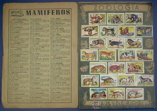 Coleccionismo Álbum: ZOOLOGIA. MAMIFEROS. COLECCIÓN COMPLETA. CROMOS CULTURA. EDITORIAL BRUGUERA. AÑOS 40. - Foto 2 - 26313663