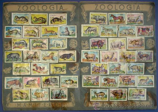 Coleccionismo Álbum: ZOOLOGIA. MAMIFEROS. COLECCIÓN COMPLETA. CROMOS CULTURA. EDITORIAL BRUGUERA. AÑOS 40. - Foto 3 - 26313663