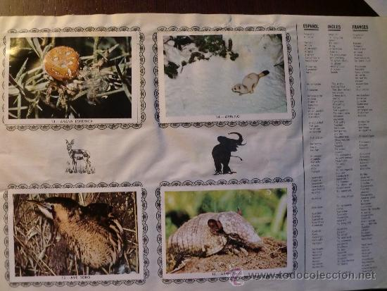 Coleccionismo Álbum: ANIMALES. COMPLETO - Foto 2 - 34608802