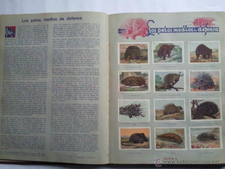 Coleccionismo Álbum: LAS MARAVILLAS DEL MUNDO, EDITADO POR NESTLE, SERIES 1 A 40, COMPLETO - Foto 3 - 40700474