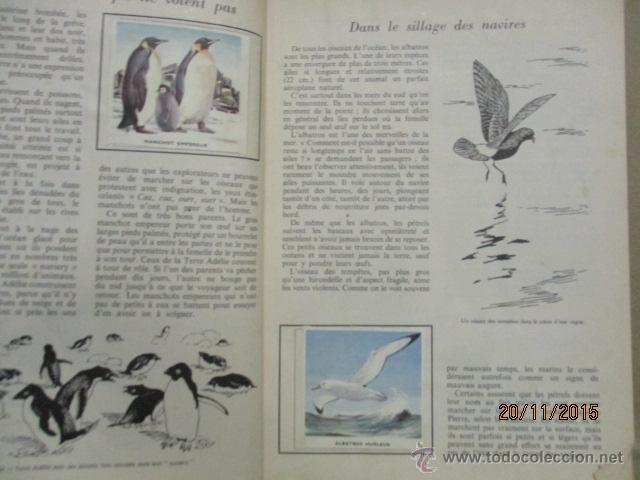 Coleccionismo Álbum: ALBUM DE CROMOS - OISEAUX - DES CINQ CONTINENTS - 1957 (VER FOTOS) - Foto 9 - 53142108