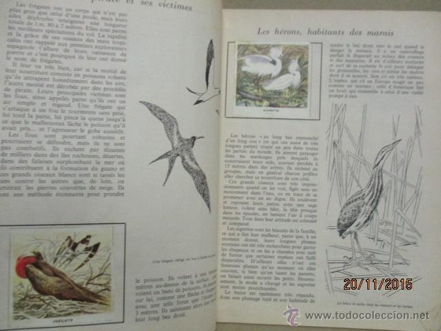 Coleccionismo Álbum: ALBUM DE CROMOS - OISEAUX - DES CINQ CONTINENTS - 1957 (VER FOTOS) - Foto 11 - 53142108