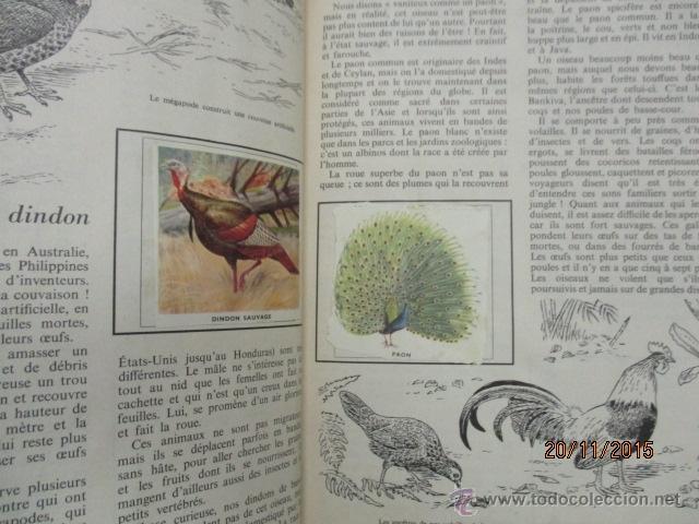 Coleccionismo Álbum: ALBUM DE CROMOS - OISEAUX - DES CINQ CONTINENTS - 1957 (VER FOTOS) - Foto 13 - 53142108