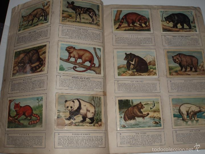 Coleccionismo Álbum: ALBUM COMPLETO ZOOLOGIA EL MUNDO DE LOS ANIMALES FERCA - Foto 2 - 56108077