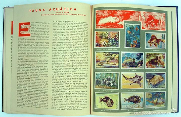 Coleccionismo Álbum: album 1944 Gallina Blanca 1er album. Buen estado.Ver fotos. Futbol, cine, animales, castillos, Colon - Foto 13 - 58207922