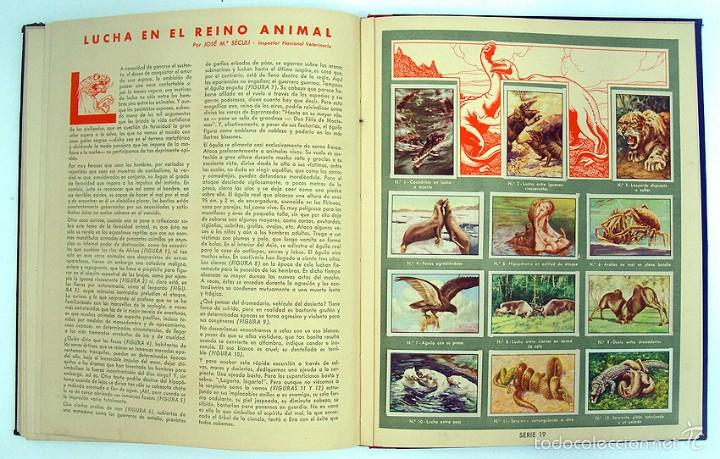 Coleccionismo Álbum: album 1944 Gallina Blanca 1er album. Buen estado.Ver fotos. Futbol, cine, animales, castillos, Colon - Foto 14 - 58207922
