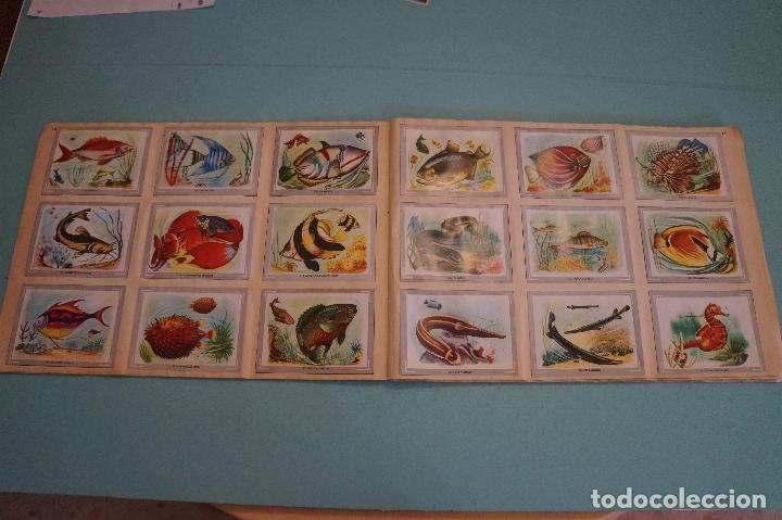Coleccionismo Álbum: ÁLBUM COMPLETO DE VIDA Y COLOR AÑO 1965 DE ALES - Foto 9 - 61442211
