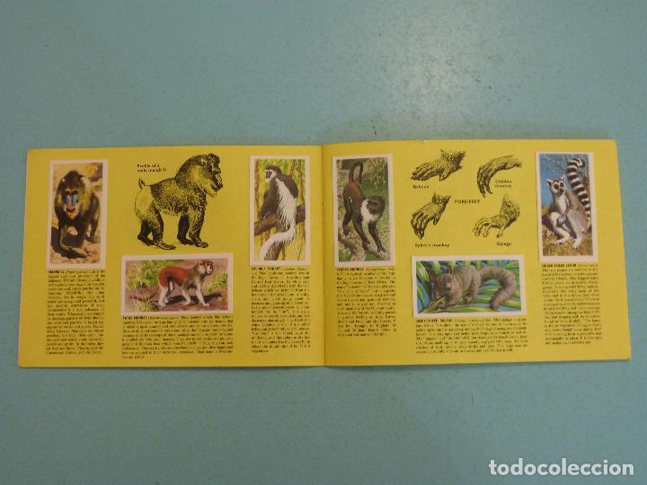 Coleccionismo Álbum: ALBUM COMPLETO DE AFRICAN WILDLIFE FAUNA AFRICANA CROMOS CIGARRILLOS INGLESES - Foto 3 - 65021219