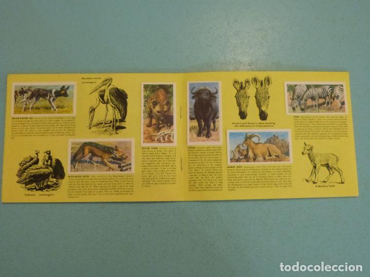 Coleccionismo Álbum: ALBUM COMPLETO DE AFRICAN WILDLIFE FAUNA AFRICANA CROMOS CIGARRILLOS INGLESES - Foto 6 - 65021219