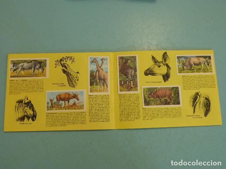 Coleccionismo Álbum: ALBUM COMPLETO DE AFRICAN WILDLIFE FAUNA AFRICANA CROMOS CIGARRILLOS INGLESES - Foto 7 - 65021219