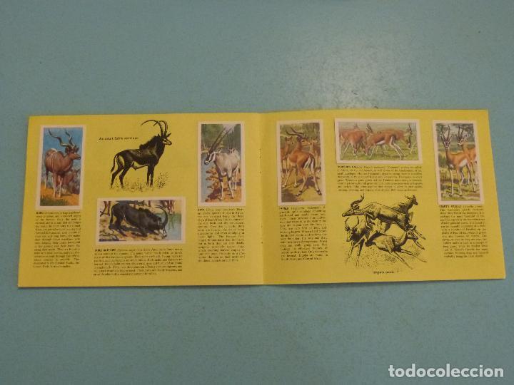 Coleccionismo Álbum: ALBUM COMPLETO DE AFRICAN WILDLIFE FAUNA AFRICANA CROMOS CIGARRILLOS INGLESES - Foto 8 - 65021219