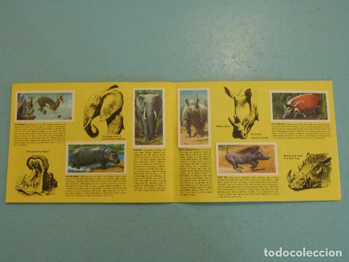 Coleccionismo Álbum: ALBUM COMPLETO DE AFRICAN WILDLIFE FAUNA AFRICANA CROMOS CIGARRILLOS INGLESES - Foto 9 - 65021219