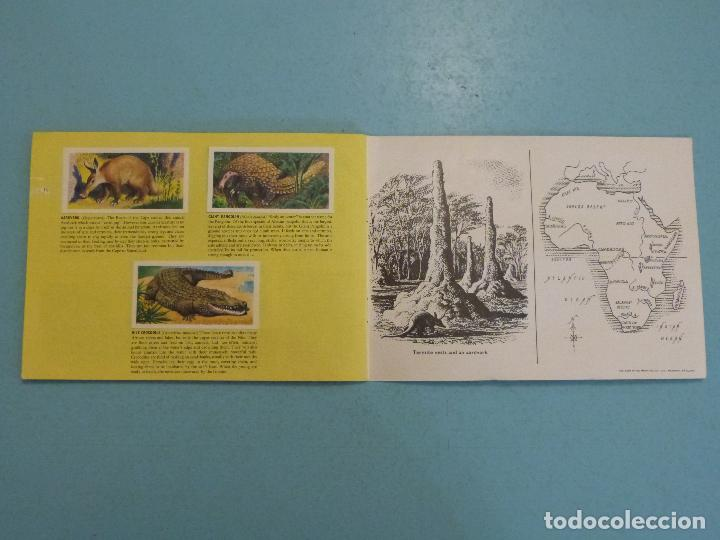 Coleccionismo Álbum: ALBUM COMPLETO DE AFRICAN WILDLIFE FAUNA AFRICANA CROMOS CIGARRILLOS INGLESES - Foto 10 - 65021219
