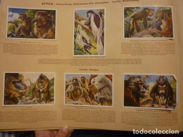 Coleccionismo Álbum: ALBUM ALEMAN COMPLETO MARAVILLAS DE LA VIDA SILVESTRE (WUNDER DER TIERWELT). MUY BUEN ESTADO. - Foto 2 - 66977510