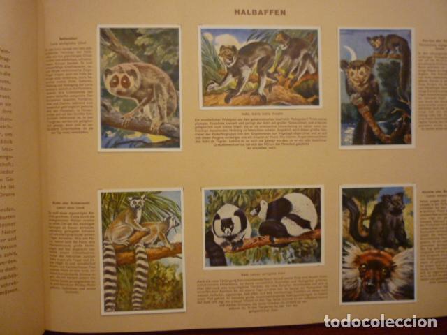 Coleccionismo Álbum: ALBUM ALEMAN COMPLETO MARAVILLAS DE LA VIDA SILVESTRE (WUNDER DER TIERWELT). MUY BUEN ESTADO. - Foto 3 - 66977510