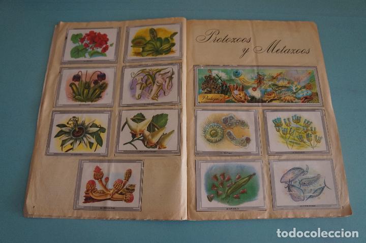 Coleccionismo Álbum: ÁLBUM COMPLETO DE NATURALEZA Y COLOR AÑO 1980 DE CAREN - Foto 6 - 86348552