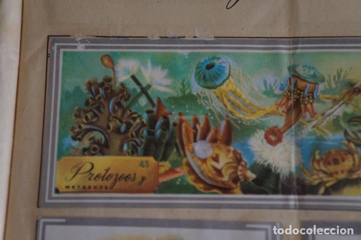 Coleccionismo Álbum: ÁLBUM COMPLETO DE NATURALEZA Y COLOR AÑO 1980 DE CAREN - Foto 8 - 86348552