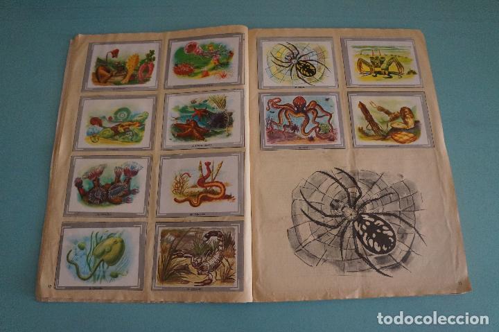 Coleccionismo Álbum: ÁLBUM COMPLETO DE NATURALEZA Y COLOR AÑO 1980 DE CAREN - Foto 9 - 86348552