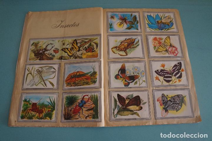 Coleccionismo Álbum: ÁLBUM COMPLETO DE NATURALEZA Y COLOR AÑO 1980 DE CAREN - Foto 10 - 86348552