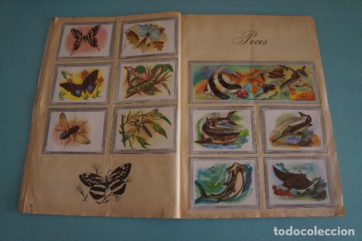 Coleccionismo Álbum: ÁLBUM COMPLETO DE NATURALEZA Y COLOR AÑO 1980 DE CAREN - Foto 12 - 86348552