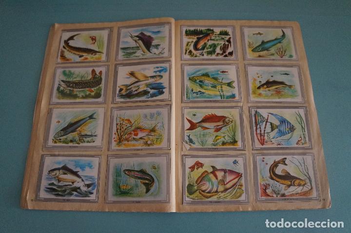 Coleccionismo Álbum: ÁLBUM COMPLETO DE NATURALEZA Y COLOR AÑO 1980 DE CAREN - Foto 13 - 86348552