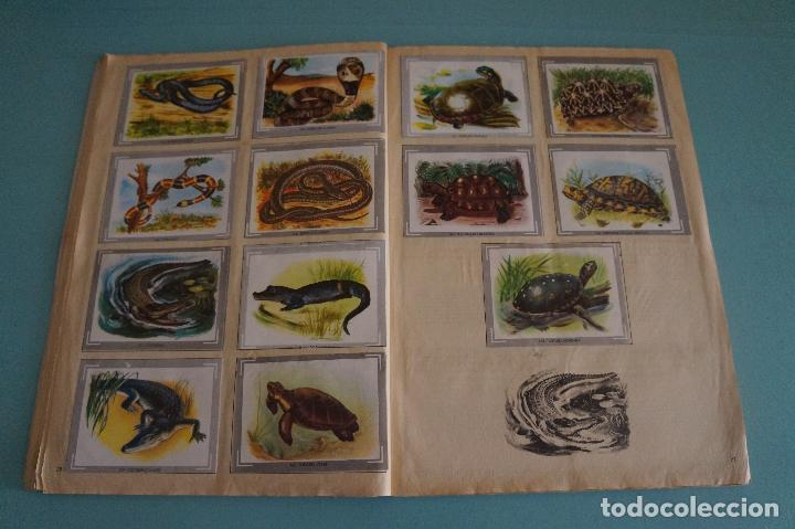 Coleccionismo Álbum: ÁLBUM COMPLETO DE NATURALEZA Y COLOR AÑO 1980 DE CAREN - Foto 17 - 86348552