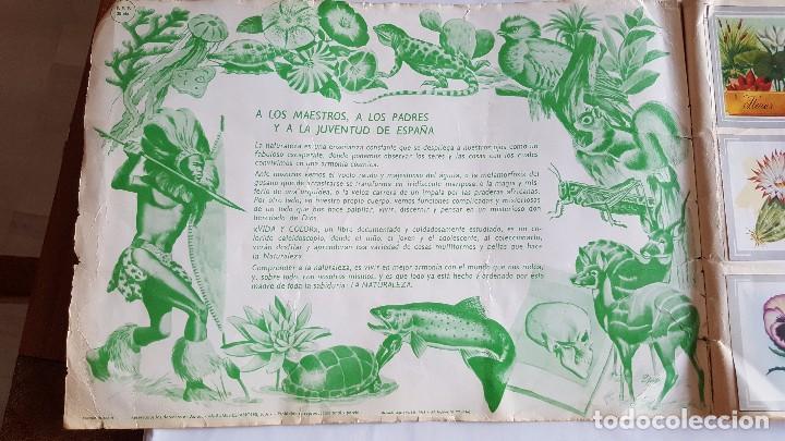Coleccionismo Álbum: f 1764 ALBUM COMPLETO DE CROMOS VIDA Y COLOR - ANIMALES, FLORES, ANATOMIA y TRIBUS 1965 - Foto 6 - 87679856