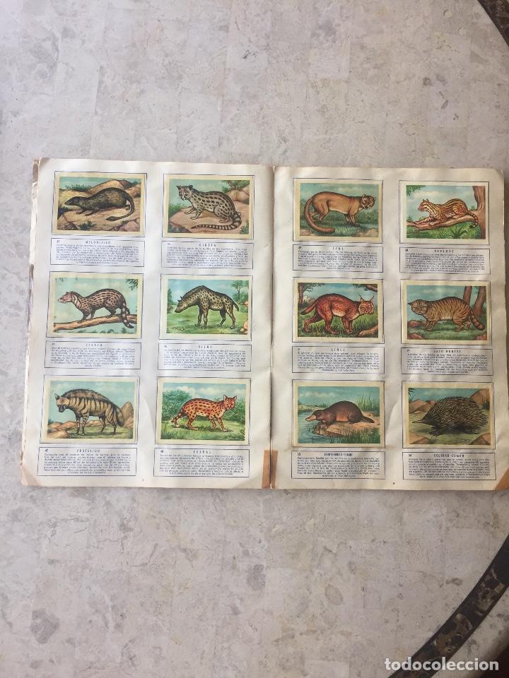 Coleccionismo Álbum: ALBUM ZOOLOGIA COMPLETO. EDICIONES FERCA 1960-1961 - Foto 3 - 125727279