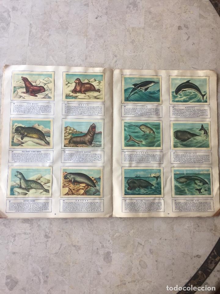 Coleccionismo Álbum: ALBUM ZOOLOGIA COMPLETO. EDICIONES FERCA 1960-1961 - Foto 4 - 125727279