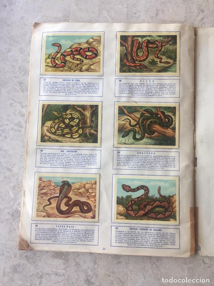 Coleccionismo Álbum: ALBUM ZOOLOGIA COMPLETO. EDICIONES FERCA 1960-1961 - Foto 5 - 125727279