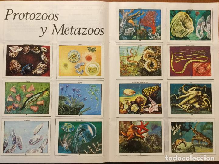 Coleccionismo Álbum: ALBUM DE CROMOS COMPLETO CIENCIAS NATURALES 1. BUEN ESTADO. AÑO 1982 - Foto 3 - 132224118