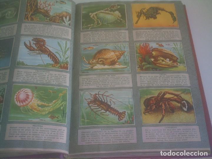 Coleccionismo Álbum: BRUGUERA COLECCION CULTURA OCHO ALBUMES COMPLETOS 2261 CROMOS - Foto 16 - 137550410