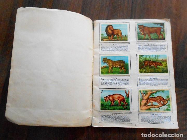 Coleccionismo Álbum: ALBUM DE CROMOS ZOOLOGIA COMPLETO FERCA 1961 ALBUN alfreedom ANIMALES ESTAMPAS CARDS CROMO - Foto 2 - 142054698