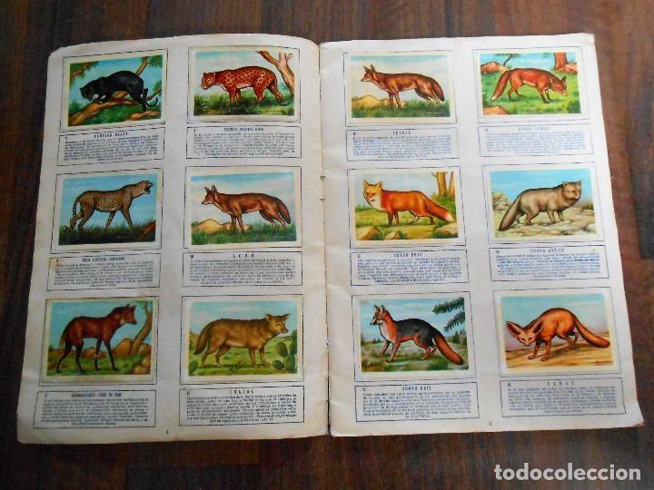 Coleccionismo Álbum: ALBUM DE CROMOS ZOOLOGIA COMPLETO FERCA 1961 ALBUN alfreedom ANIMALES ESTAMPAS CARDS CROMO - Foto 3 - 142054698
