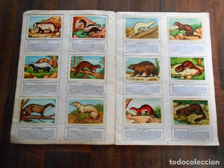Coleccionismo Álbum: ALBUM DE CROMOS ZOOLOGIA COMPLETO FERCA 1961 ALBUN alfreedom ANIMALES ESTAMPAS CARDS CROMO - Foto 5 - 142054698