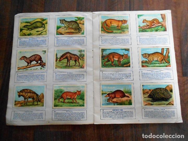 Coleccionismo Álbum: ALBUM DE CROMOS ZOOLOGIA COMPLETO FERCA 1961 ALBUN alfreedom ANIMALES ESTAMPAS CARDS CROMO - Foto 6 - 142054698