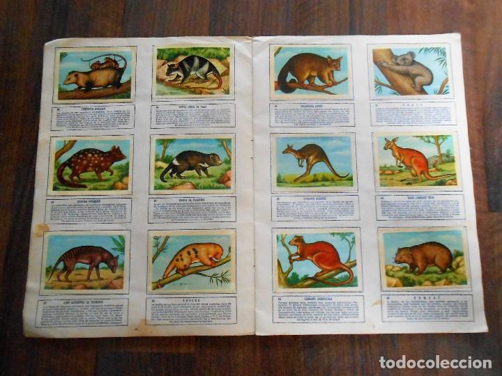 Coleccionismo Álbum: ALBUM DE CROMOS ZOOLOGIA COMPLETO FERCA 1961 ALBUN alfreedom ANIMALES ESTAMPAS CARDS CROMO - Foto 7 - 142054698