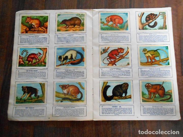 Coleccionismo Álbum: ALBUM DE CROMOS ZOOLOGIA COMPLETO FERCA 1961 ALBUN alfreedom ANIMALES ESTAMPAS CARDS CROMO - Foto 8 - 142054698