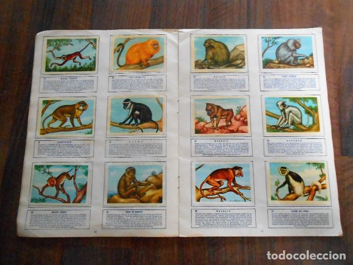Coleccionismo Álbum: ALBUM DE CROMOS ZOOLOGIA COMPLETO FERCA 1961 ALBUN alfreedom ANIMALES ESTAMPAS CARDS CROMO - Foto 9 - 142054698