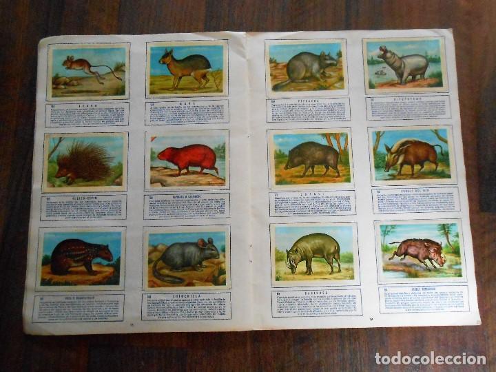 Coleccionismo Álbum: ALBUM DE CROMOS ZOOLOGIA COMPLETO FERCA 1961 ALBUN alfreedom ANIMALES ESTAMPAS CARDS CROMO - Foto 11 - 142054698