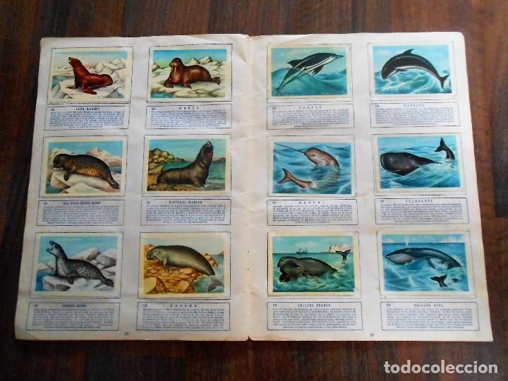 Coleccionismo Álbum: ALBUM DE CROMOS ZOOLOGIA COMPLETO FERCA 1961 ALBUN alfreedom ANIMALES ESTAMPAS CARDS CROMO - Foto 16 - 142054698