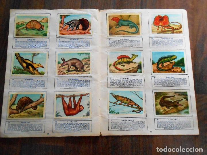 Coleccionismo Álbum: ALBUM DE CROMOS ZOOLOGIA COMPLETO FERCA 1961 ALBUN alfreedom ANIMALES ESTAMPAS CARDS CROMO - Foto 17 - 142054698